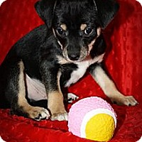 Adopt A Pet :: Lover Boy - Broomfield, CO