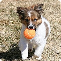 Adopt A Pet :: Aidyn - Mission, KS