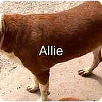 Adopt A Pet :: Allie,FL - Miami Beach, FL