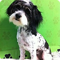 Adopt A Pet :: Chiquita - Goleta, CA