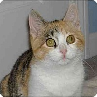 Adopt A Pet :: KITTENBeaker - Plainville, MA
