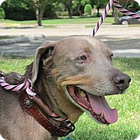 Adopt A Pet :: Maggie May - Kingwood, TX