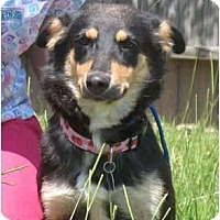 Adopt A Pet :: Misty - Kingwood, TX