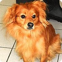 Adopt A Pet :: Mango - Rockaway, NJ
