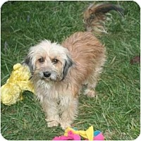 Adopt A Pet :: Benji - Westfield, IN