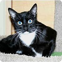 Adopt A Pet :: Banjo - Irvine, CA