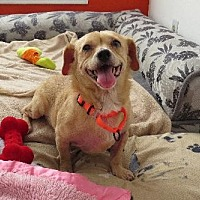 Adopt A Pet :: Vivienne (Sweet Angel) - Santa Monica, CA