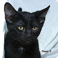 Adopt A Pet :: Owen V - Sacramento, CA