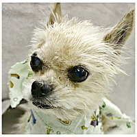 Adopt A Pet :: Wilma - Forked River, NJ