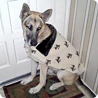 Adopt A Pet :: Chuppy - Fort Worth, TX