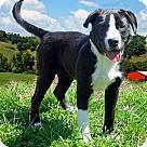 Adopt A Pet :: PUPPY MARISSA