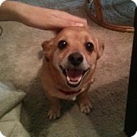 Adopt A Pet :: Bowser - San Francisco, CA