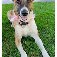 Adopt A Pet :: Miss Moo pending - Sacramento, CA