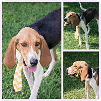 Adopt A Pet :: Maxwell - Burlington, NJ