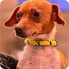Adopt A Pet :: Spotty