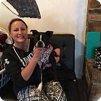 Adopt A Pet :: Starla - Weatherford, TX