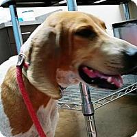 Adopt A Pet :: Faith - Tucson, AZ