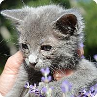 Adopt A Pet :: Pip - Stanford, CA