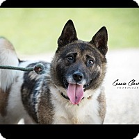 Adopt A Pet :: Cortez - RESCUED! - Zanesville, OH