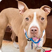Adopt A Pet :: Flannery O'Conner - Brooklyn, NY