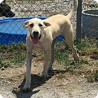 Adopt A Pet :: Madison - Lewisburg, TN