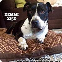 Adopt A Pet :: Demmi - Spring, TX