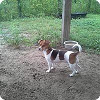 Adopt A Pet :: Leia - Odessa, FL