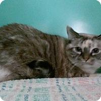 Adopt A Pet :: Willow - Franklin, NH