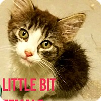 Adopt A Pet :: LITTLE BIT - Glendale, AZ