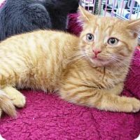Adopt A Pet :: Flynn - Castro Valley, CA