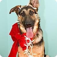 Adopt A Pet :: Duke - Glastonbury, CT