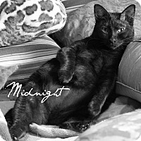 Adopt A Pet :: Midnight - McKinney, TX