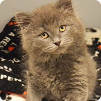 Adopt A Pet :: Grayson - Lincoln, NE