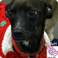 Adopt A Pet :: Jett - Canutillo, TX