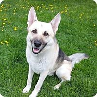 Adopt A Pet :: Teddy - Northville, MI