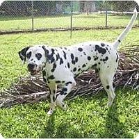 Adopt A Pet :: Aldrich - Key Biscayne, FL