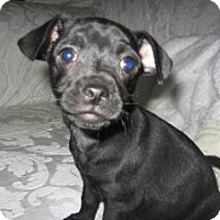 Adopt A Pet :: Ultra - Bakersfield, CA