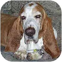 Adopt A Pet :: Maynard - Phoenix, AZ
