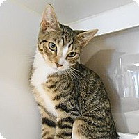 Adopt A Pet :: Todd - Maywood, NJ