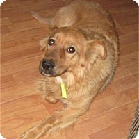 Adopt A Pet :: Rosie - Golden Valley, AZ