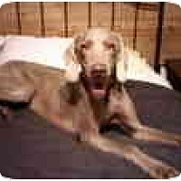 Adopt A Pet :: Princess  **ADOPTED** - Eustis, FL