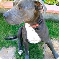 Adopt A Pet :: Marley - Las Vegas, NV