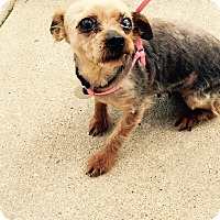 Adopt A Pet :: Lily (Marsha) - Cleveland, OH