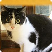 Adopt A Pet :: Gretl - Medina, OH