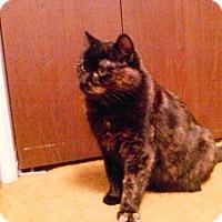 Adopt A Pet :: Allie - Boise, ID