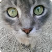 Adopt A Pet :: Eddie - Bonita Springs, FL