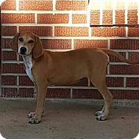 Adopt A Pet :: Bonnie - Buffalo, NY