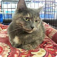 Adopt A Pet :: NOVA - Fenton, MO