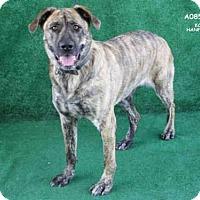 Adopt A Pet :: A085886 - Hanford, CA