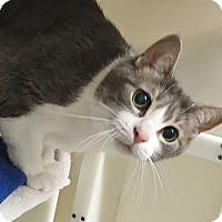 Adopt A Pet :: Beaks - Salisbury, MA